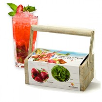Kit de plantación de cocktail de verano
